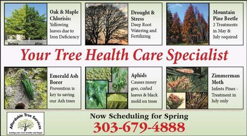 Coupon: Affordable Tree Services, LLC - Now Scheduling